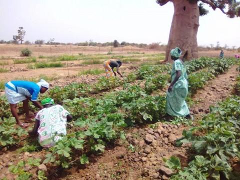 Diante Bou Bess et Fundación Diagrama développent au Sénégal un programme d'enseignement agricole pour les femmes paysannes. 2018